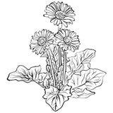 Eleganccy dekoracyjni gerbera kwiaty Obrazy Stock