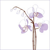 Elegance branch of purple orchids Royalty Free Stock Image