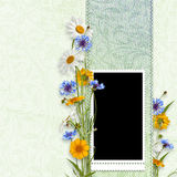 Elegance frame with summer flowers Stock Photography