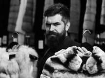 Elegance and glamour concept. Customer with beard chooses furry coats. Man with strict face. Holds furry coats with clothes rack on background. Businessman with Royalty Free Stock Images