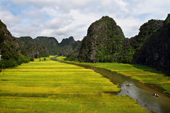 Elegance of the rice fields Stock Image