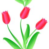Elegance Seamless color tulips pattern Stock Photos