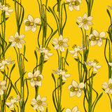 Elegance Seamless pattern with flowers daffodils, vector floral illustration in vintage style. Yellow background. Elegance Seamless pattern with flowers Stock Photos