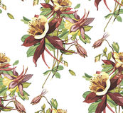 Elegance seamless pattern in vintage style with Crocosmia flowers. EPS 10 Stock Photos