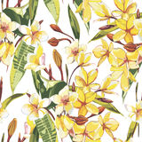 Elegance seamless pattern in vintage style with Plumeria flowers. EPS 10 Stock Image