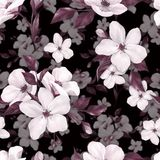 Elegance seamless pattern with white apple flowers. On black background stock illustration
