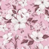 Elegance seamless pattern with white apple flowers. On pink royalty free illustration