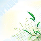Elegance spring background Royalty Free Stock Photography