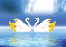 Elegance Swan. Elegance and Graceful swan lit by the color ground Royalty Free Stock Images