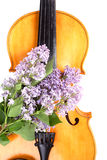 Elegance  viola. Musical background � instruments. Shot in studio Royalty Free Stock Photography