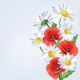 Eleganci tło z maczka i rumianku kwiatami Zdjęcia Stock