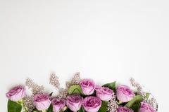 Elegancia blanca del fondo de la flor rosada de las rosas Imágenes de archivo libres de regalías