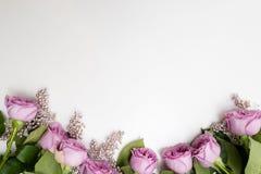 Elegancia blanca del fondo de la flor rosada de las rosas Fotografía de archivo libre de regalías