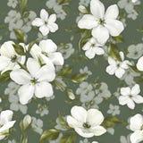 Elegancja bezszwowy wzór z białymi jabłko kwiatami 12 royalty ilustracja
