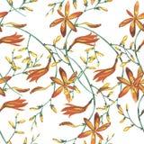 Elegancja bezszwowy wzór w rocznika stylu z Crocosmia kwitnie royalty ilustracja