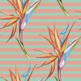 Elegancja bezszwowy wzór w rocznika stylu z Strelitzia kwitnie 10 eps ilustracja wektor