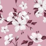 Elegancja bezszwowy wzór z białymi jabłczanymi kwiatami ilustracji