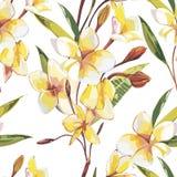 Elegancja bezszwowy wz?r w rocznika stylu z Plumeria kwitnie ilustracje tropikalne ilustracja wektor