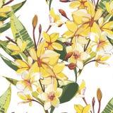 Elegancja bezszwowy wz?r w rocznika stylu z Plumeria kwitnie ilustracje tropikalne royalty ilustracja