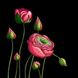 Elegancja koloru peoni Bezszwowy wzór na czarnym tle, ilustracji