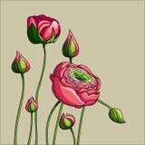 Elegancja koloru peonia na zielonym tle ilustracja wektor