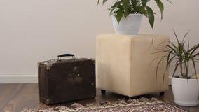 Elegancka część żywy pokój z starą rocznik walizką i puszkować roślinami jaskrawy, tradycyjny handmade dywan na luksusowym drewni zbiory