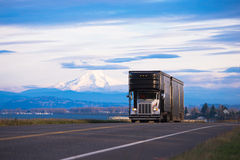 Elegancka klasyka semi ciężarówka dla transportu luksusowi samochody Obrazy Royalty Free