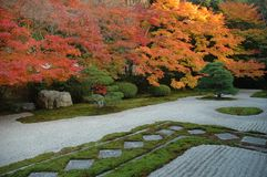 Elegancka ogrodowa jesień Obraz Royalty Free