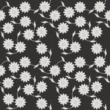 Elegancki bezszwowy wzór z białym kwiatem na czarnym tle Zdjęcie Royalty Free