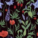 Elegancki botaniczny bezszwowy wzór z dzikimi kwiatami i ziele na czarnym tle - śródpolni maczki, lupine, wielki krwiściąg Fotografia Stock