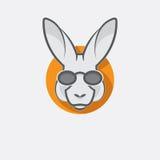 Elegancki kangur z szkłami Obraz Royalty Free