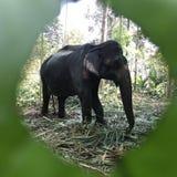 Elegancki słoń! Obrazy Royalty Free