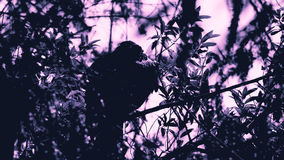 Elegancki sunning myszołów w drzewie Fotografia Royalty Free