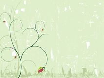 elegancki tła rose Fotografia Stock