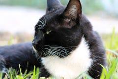 Elegancki tux kot w profilu zdjęcie royalty free