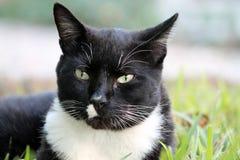 Elegancki tux kot w profilu zdjęcia stock