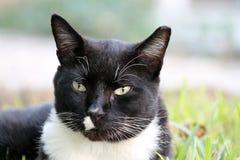 Elegancki tux kot w profilu obrazy stock