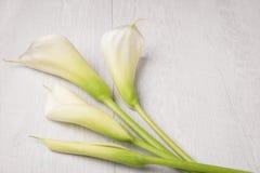 Elegancki wiosna kwiat, kalii leluja obrazy stock