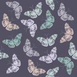 Elegancki wzór z motylem Zdjęcie Stock