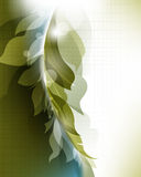 Elegant abstract foliage wave elements template ba Royalty Free Stock Photography