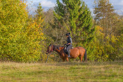 Elegant attractive woman riding a horse meadow Royalty Free Stock Image