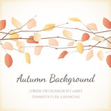 Elegant Background with Autumn Leaves at the Top Stock Photography