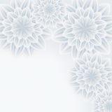 Elegant background with flower chrysanthemum Stock Image