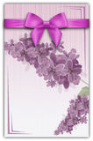 Elegant background with lilac branch and ribbon with bow. Royalty Free Stock Image
