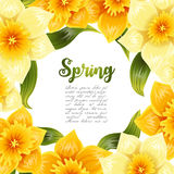 Elegant background with yellow daffodil narcissus. Spring flower with stem and leaves. Realistic pattern Royalty Free Stock Photo