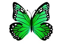Elegant and beautiful butterfly isolated on white background. Illustration design