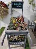 Succulent plants in a rustic cart full of small plants for sale stock photography