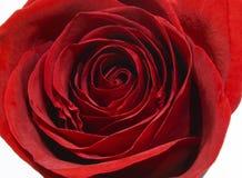 Elegant and beautiful macro of red rose. Elegant and Beautiful red roses macro Royalty Free Stock Photos