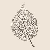 Elegant birch leaf Royalty Free Stock Photo