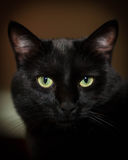 Elegant Black Cat Stock Image